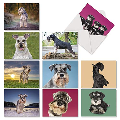 10 Assorted Magnificent Miniature Schnauzers - Blank All Occasion Dog Note Cards with Envelopes (4 x 5.12 Inch) - Adorable Dogs and Puppy Stationery Greeting Notecards AM6832OCB-B1x10