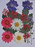 LoveDiyLife mixed Daisy Larkspur myosotis leaf real pressed dried flowers