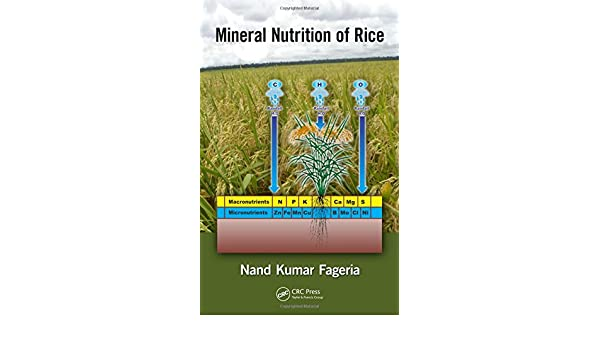 Understand that the rice plant needs nutrients to grow