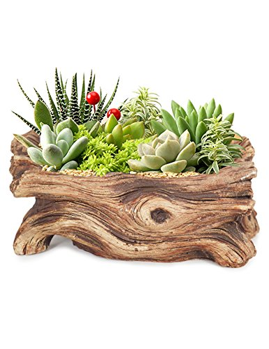 Dahlia Driftwood Stump Log Concrete Planter/Succulent Pot/Plant Pot, 7.4L x 3.9W ()