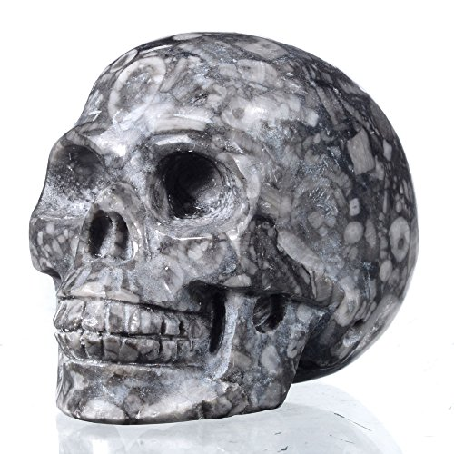"""Mineralbiz New Design! 1.8"""" - 2"""" Realistic Natural Crinoid Fossil Hand Carved Hollowed Human Crystal Skull Sculpture Healing Gemstone Carving Reiki"""