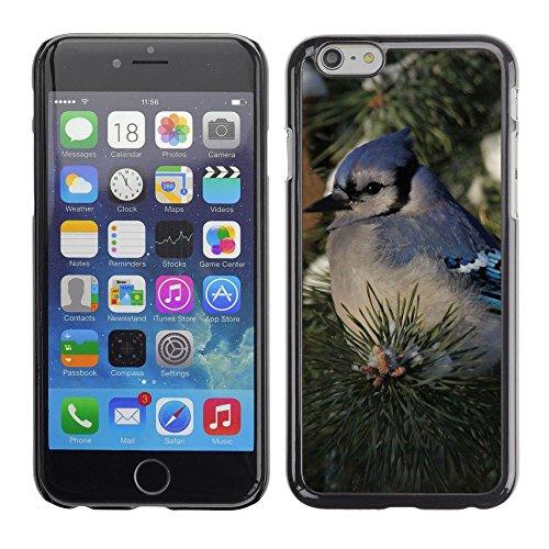 "Premio Sottile Slim Cassa Custodia Case Cover Shell // F00002345 de plein air // Apple iPhone 6 6S 6G PLUS 5.5"""