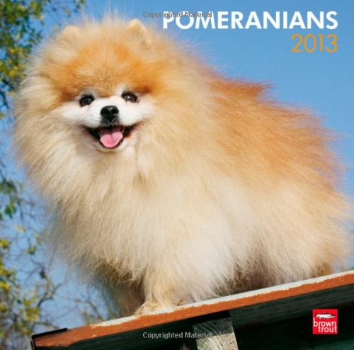 Pomeranians 2013 - Zwergspitze - Original BrownTrout-Kalender