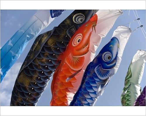 Photographic Print of Koinobori, or carp streamers, seen throughout Japan around Children s Day