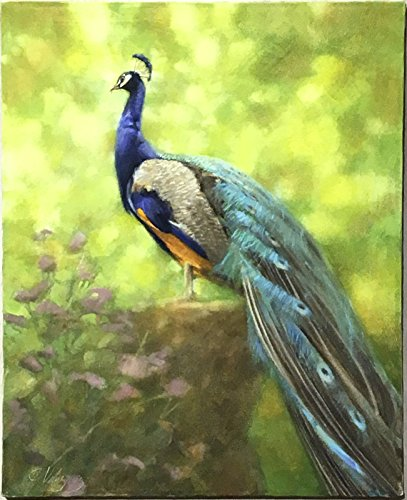 Peacock by Joe Velazquez from Unknown