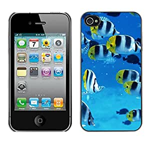 Hot Style Cell Phone PC Hard Case Cover // M00001630 Fishes Pattern // Apple iPhone 4 4S