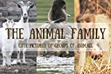 THE ANIMAL FAMILY: Cute Pictures of Groups of Animals