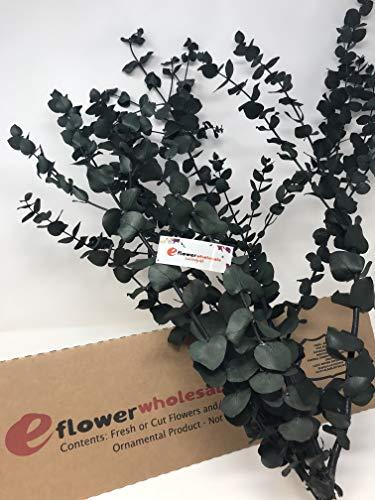 eflowerwholesale Preserved Fresh Eucalyptus Green ()