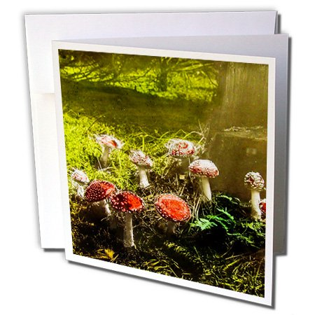(Scenes from the Past Magic Lantern - Vintage Fantastic Funky Fungus Mushrooms in the Forest 1890s - 1 Greeting Card with envelope (gc_246047_5))