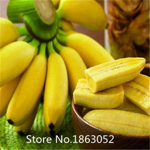 HOO PRODUCTS - 200pcs/bag imported banana seeds, milk taste,beautiful delicious fruit seeds Flower Seeds Hot Sale!