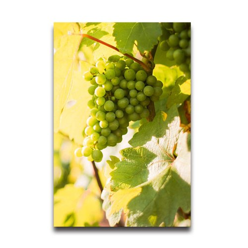 Grapevine Design Wall - White Grapes Grapevine in a Vineyard Customized Decorative Creative Art Design Wall Decor Custom Poster 20
