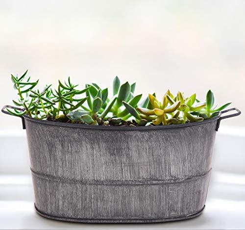 IndoorOutdoor-Water-Globes-for-Plants