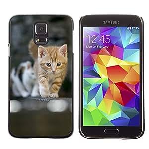 Carcasa Funda Case // V0000905 Cat Kitty Animal Pattern // Samsung Galaxy S5 i9600
