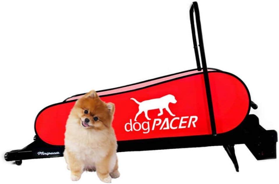 Domestic dogpacer de Mascota Perro Cinta de Correr interacción ...