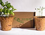 "Indoor Succulent Garden Kit (3 Pack) by Earth Safe Gardening Company|""Hens and Chicks"" Seed Mix with 3 Biodegradable Coconut Husk Pots and Plant Peat