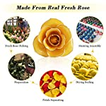 Ejoyous-24K-Gold-Dipped-Real-Rose-wRose-Stand-Forever-Blooming-Yellow-Golden-Rose-Gift-for-Her-on-Birthday-Proposal-Valentines-Day-Wedding-Anniversary-Yellow-with-Stand