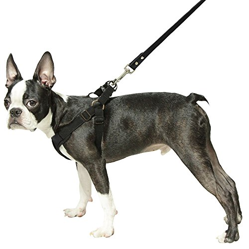 Gooby Choke Free Step-in Comfort Dog Harness, Black, X-Large by Gooby (Image #3)