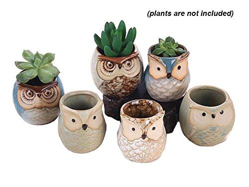 Lawn Planter (Everyday Better Life 6 PCS Set Mini Cute Animal Owl Shaped Cartoon Home Garden Decoration Succulent Cactus Flower Pot/Plant Pots/Planter/Container)
