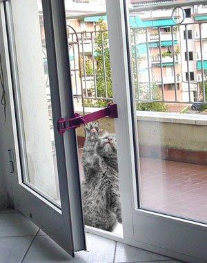 Ferma finestre click comp blocca finestra rosso per - Ferma finestra ikea ...