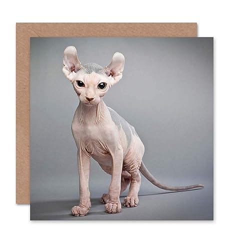 Wee Blue Coo Sphynx Cat Bald Birthday Art Sealed Greeting Card Plus  Envelope Blank Inside