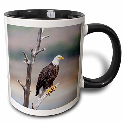 3D Rose 231902_4 Wyoming, Bald Eagle roosting on snag Two Tone Ceramic Mug Black