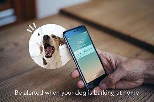 Furbo Dog Camera: Treat Tossing, HD Wifi Cam, and 2-Way Audio