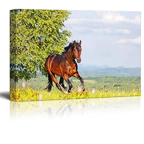 Bay Horse Skips on a Meadow Against Mountains Home Deoration Wall Decor