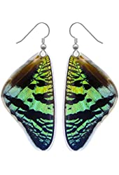Real Moth Wing Earrings - Sunset Moth Top Wing - Cruelty Free Butterfly Jewelry