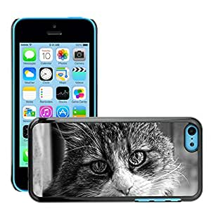 Hot Style Cell Phone PC Hard Case Cover // M00117351 Pet Mammal Tomcat View Eyes // Apple iPhone 5C