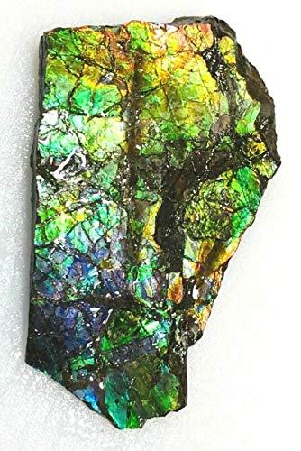 캐나다 자연 5.4X3.1 고급 거친 AMMOLITE 화석 258
