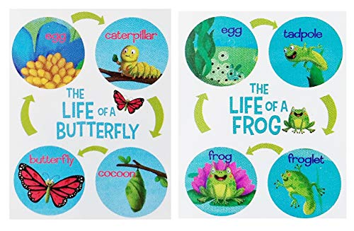 (A&T Designs 2 Pack Life Cycle of A Butterfly and Frog Educational Posters - Cocoon, Tadpole (Science Biology Teacher Student Interactive Learn School Homeschool Practice Foundational Skills - Fun!))