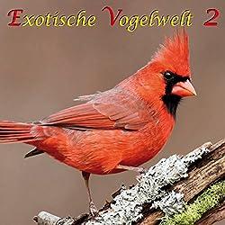 Exotische Vogelwelt 2