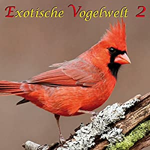 Exotische Vogelwelt 2 Hörbuch
