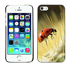 Hot Style Cell Phone PC Hard Case Cover // M00100458 animals ladybug // Apple iPhone 5 5S
