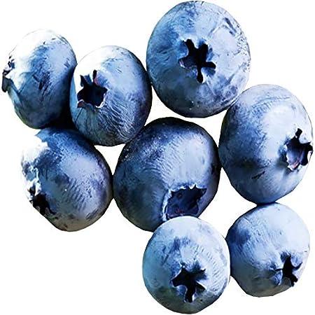 Vaccinium corymbosum-Norther highbush Blueberry seeds 15 seeds