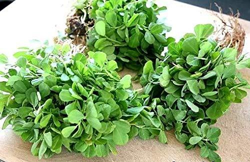 Fenugreek Capsules - 100 by Organic Verde (Image #1)