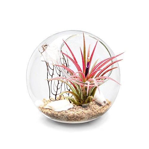 Mkono Plant Terrarium Display Glass Tabletop Succulent Air Plant Planter Globe Microlandschaft House, S