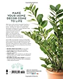 Houseplants: The Complete Guide to