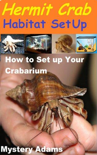 Hermit Crab Habitat Setup : Hermit Crab Care and Habitat Set-up