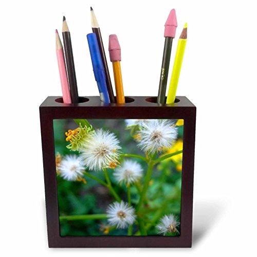 danita-delimont-flower-garden-weed-seeding-itself-5-inch-tile-pen-holder-ph-228242-1