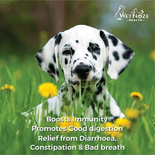 Probiotics for Dogs top Relief Probiotics