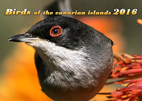 Birds of the canarian islands
