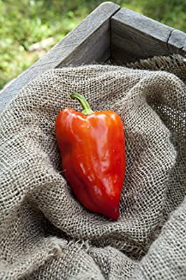 Feher Ozon Feherozon Hungarian Sweet Paprika Pepper Premium Seed Packet + More