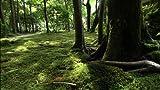 Documentary - Wild Life Kyoto Honenin Inochi No Niwa [Japan DVD] NSDS-18331