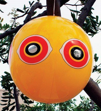 Bird-B-Gone Humane Scare Eye Balloon