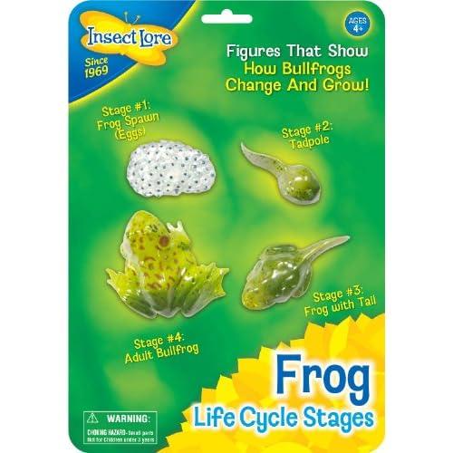 Insect Lore 48126 - Le cycle de la vie grenouille