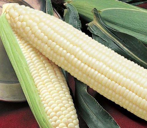 Silver Queen Corn Seeds - 50+ Rare Non-GMO Organic Heirloom Vegetable Garden - Silver Queen Corn