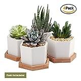 #10: Succulent Plant Pots,OAMCEG 2.75 inch Succulent Plant Pots,Set of 4 White Ceramic Succulent Cactus Planter Pots with Bamboo Tray