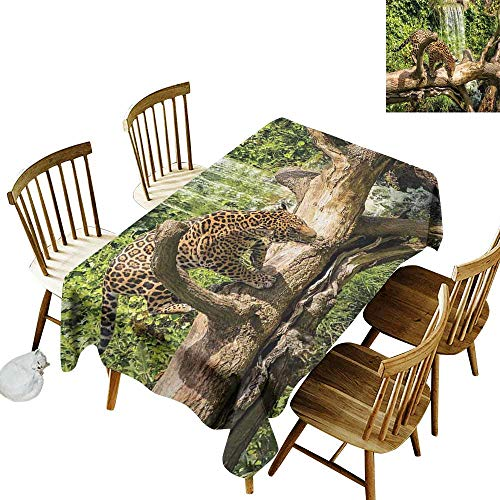 - Safari Decor Easy to care for leakproof and durable long tablecloths Outdoor picnic Jaguar cat on a Tree Trunk Waterfall in the Backbround Endangered Species Wild Life Fast Animal W60 x L102 Inch