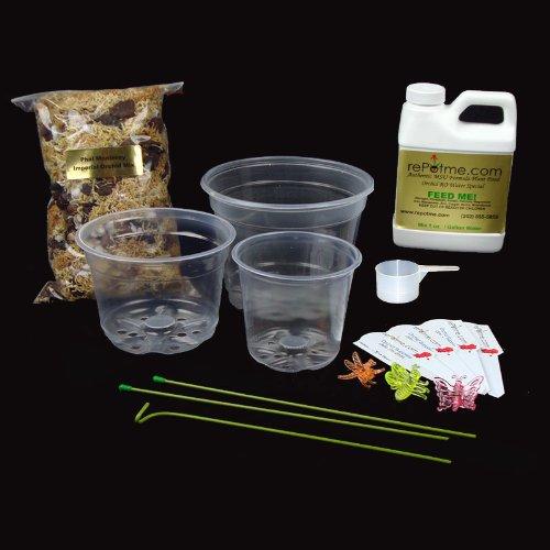Phalaenopsis Orchid Growing Starter Kit - Includes Instruction (Growing Phalaenopsis Orchids)